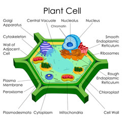Education Chart of Biology for Plant Cell Diagram