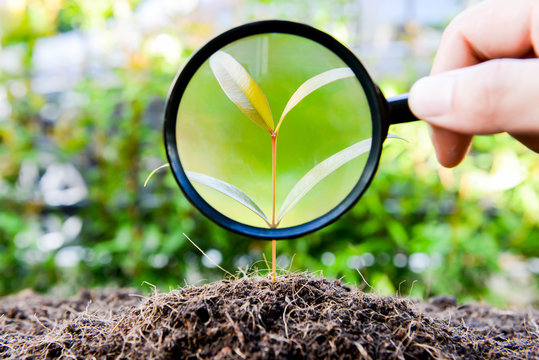 human hand is using magnifying glass to the growing plant