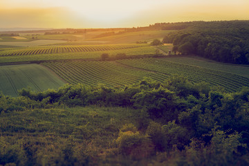 Vineyards on evening around the hill.