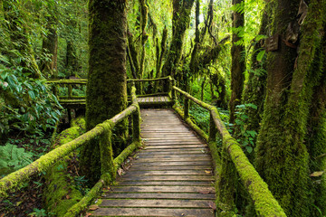 Green moss and wooden bridge, Wooden Path way with green moss at the evergreen forest