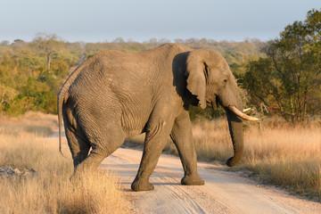Shots from Djuma Sabi Sands South Africa