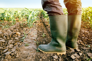 Farmer in rubber boots standing in corn field