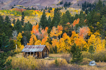 A small old cabin is surrounded by beautiful fall foliage in autumn in Hope Valley, California.