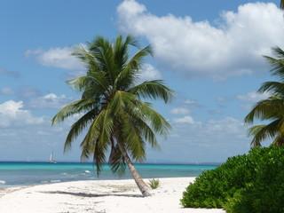 Palmenstrand in der Dominikanischen Republik