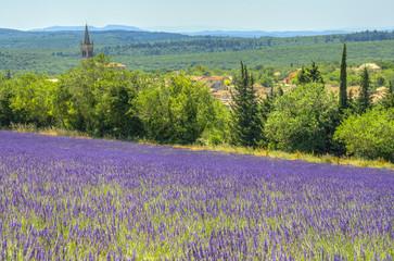 Printed roller blinds Lavender champ de lavande à Montjoyer
