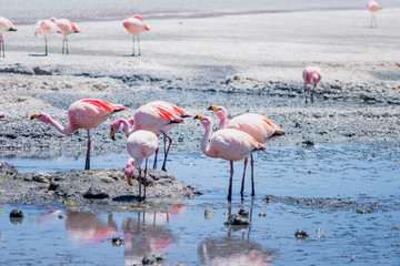 Hedionda lagoon is  located in the south west of Bolivia, not far from the Chilean border, around the climate is very dry and arid and in these stretch of water it's normal to find a lot of flamingos