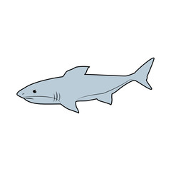 shark marine wild life nature animal vector illustration