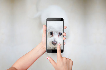 Little girl taking photo of her dog with smartphone