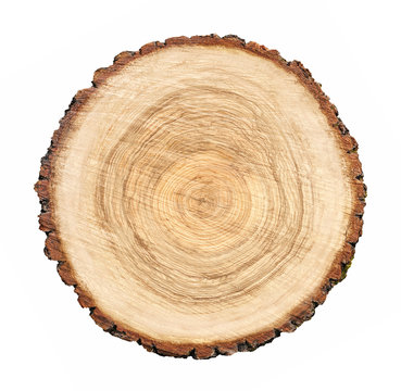Large circular piece of wood cross section with tree ring texture pattern and cracks isolated on white background.