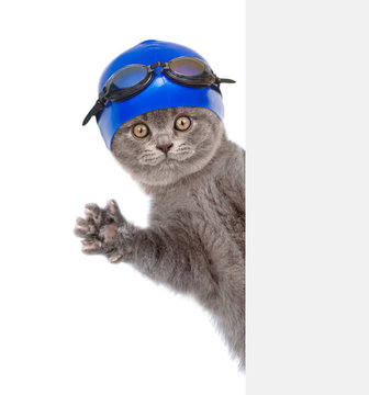 Cat with swimming hat and glasses peeking behind white banner. Isolated on white background