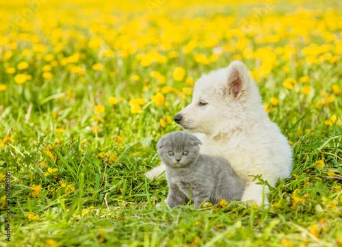 Puppy embracing kitten on a dandelion field