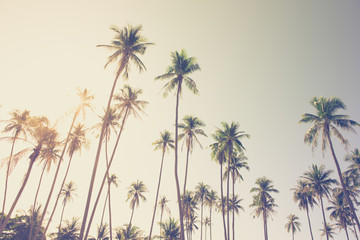Coconut palm trees at the island