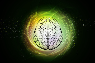 Human brain structure