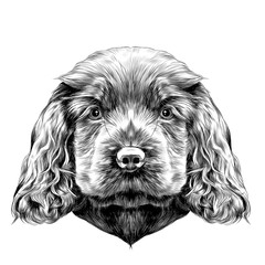 dog breed Cocker Spaniel puppy, sketch vector graphics black and white drawing