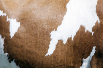 abstract red and white pattern on side of cow