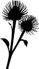 burdock silhouette isolated on white