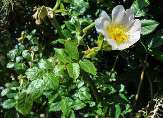Briar Rose South Downs UK