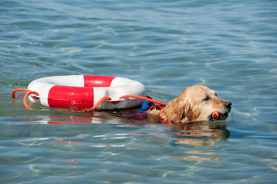 Lifeguard dogs and instructor at the beach.