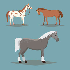 Collection of isolated horses. Cute cartoon horse farm animals. Differend breads