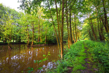 A forest path near a river in the green forest in Herford germany