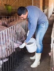 Portrait of male farmer feeding domestic pigs