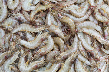 Whiteleg shrimp on sell in fresh market, Thailand