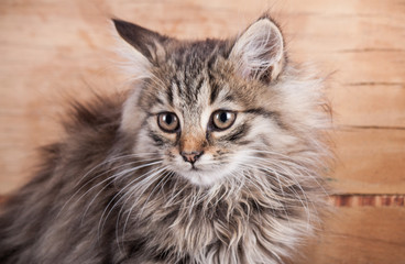 Portrait cat close up