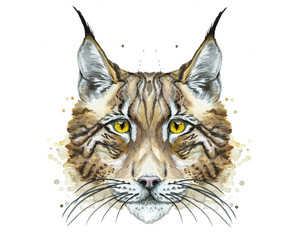 Painted drawing watercolor animal predator lynx, printshop, art decor