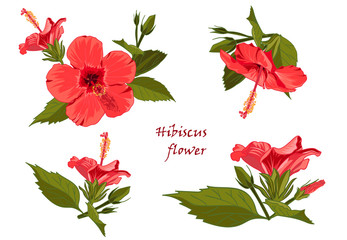 Set red hibiscus flower with leaves in realistic hand-drawn style