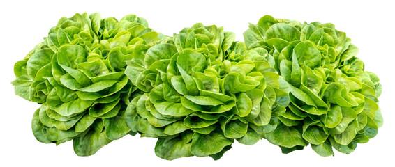 3 isolierte Salatköpfe, Salavona