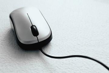 Mouse closeup