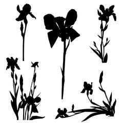 iris silhouettes series