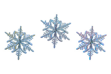 Set with three color variants of same snowflake isolated on white background. This is macro photo of real snow crystal: big stellar dendrite with long, thin and fragile arms.