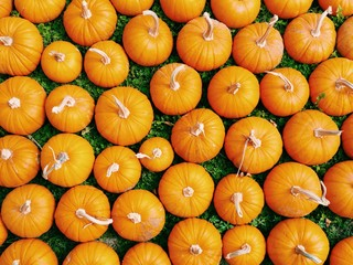 Full Frame Shot Of Pumpkins On Field