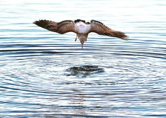 Seagull Hunting At Sea
