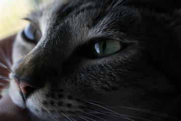 Retrato felino (Sin Editar)