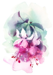 Watercolor Fuchsia Summer Flowers Hand Painted Floral Header Banner Pink Illustration