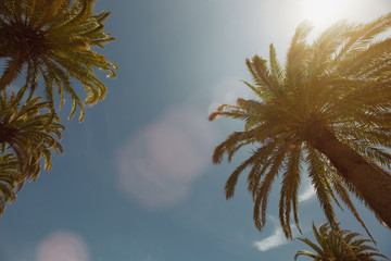 Palm trees on blue sky background, sun and summer day