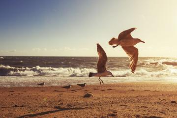 Gulls flying on ocean sunset