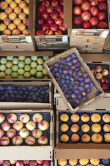 A range of stone fruits in boxes