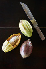 Belcampo cacao pods cut in half at a table in the Belcampo nursery