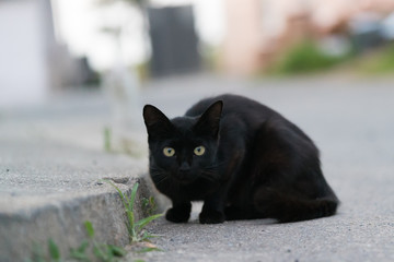 警戒する黒猫の子猫