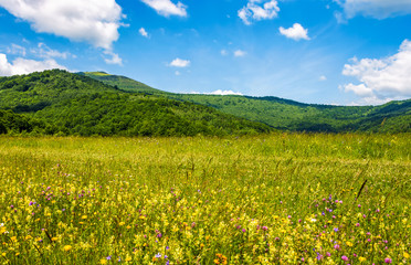 field with wild herbs in summer mountain landscape