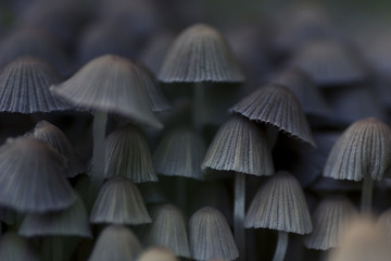 Close up of gray mushrooms
