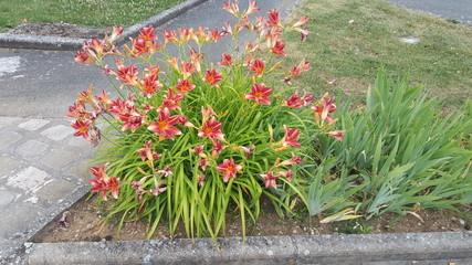 plantes de prinntemps