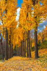 Autumn Leaves and Color Changes in Seoul Park, Korea