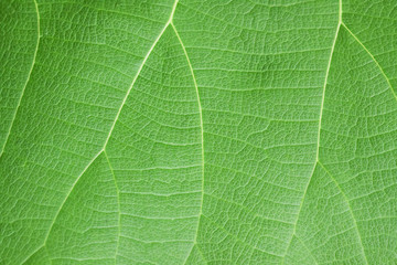 Patterns on leaves in nature