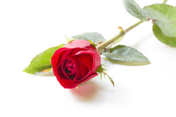 Redroses isolated on a white background