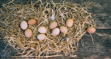 Fresh eggs on nest. chicken organic eggs with straw in nest.