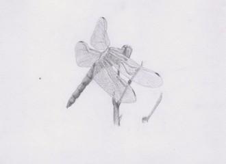 Стрекоза, нарисованная карандашом